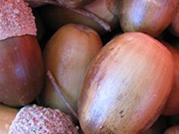 Colheita e processamento de sementes florestais
