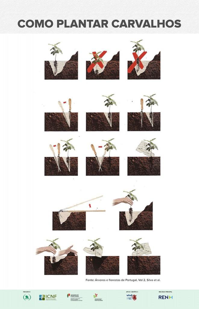 Como plantar carvalhos